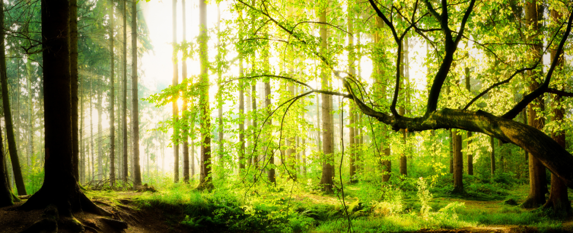 The Magic Forest image